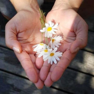 Hands with Daisies