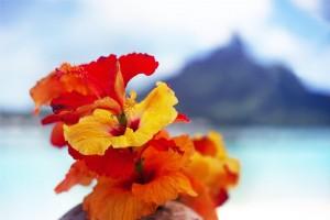 Hibiscus Island